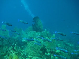 Peces en arrecife de coral en Utila